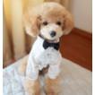 【秋冬新作】【メール便1点可】リボン付 シンプル長袖シャツ S~XXL(ハンガー無)【犬 服】